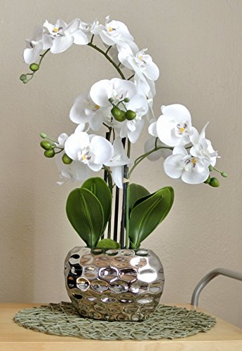 Silver Orchid The Best Amazon Price In Savemoney