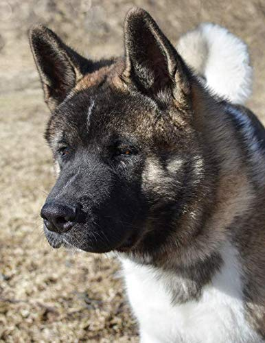 Notebook: Akita American pet dog canine animal