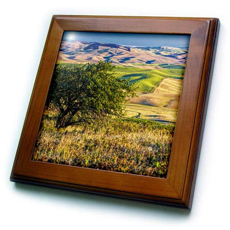 3dRose Danita Delimont - Washington - USA, Washington State, Palouse, Apple Tree Overlooking Rolling Hills - 8x8 Framed Tile (ft_315199_1)