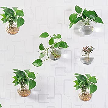 6 Pcs Wall Hanging Planters Round Glass Plant Pots Hanging Air Plant