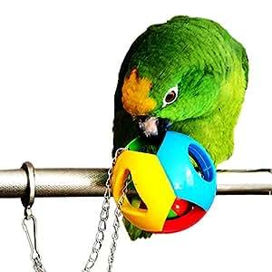 Amazon Parrots - Nationwide Pet Insurance