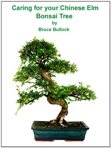 Elm Chinese Bonsai Tree (Caring For Your Chinese Elm Bonsai Tree)