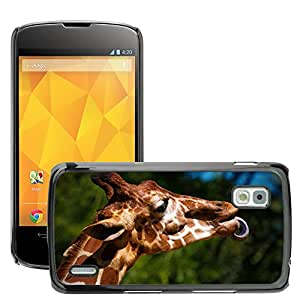 Hot Style Cell Phone PC Hard Case Cover // M00046527 animals giraffe tongue sticking out // LG NEXUS 4