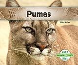 Pumas (Grandes Felinos/Big Cats) (Spanish Edition)