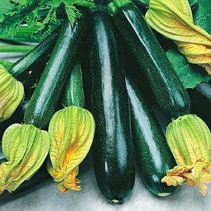Vegetable Black Zucchini Heirloom Squash Seeds 20 Vegetables Heirloom Seeds