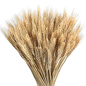 Wedding Decorations Dried Wheat Sheaves,100pcs Natural Wheat Bouquet Bunch Stalk Bundle,Bride and Groom Holding Flowers,DIY Home Kitchen Table Wedding Centerpieces (a) 4