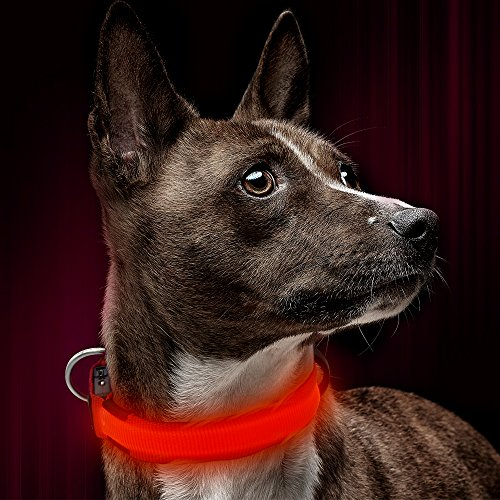 Illumifun LED Dog Collar, USB Rechargeable Light Up Dog Collar, Adjustable Glowing Dog Collar Make Your Small Dog Safe& Seen in The Dark(Red, Small)