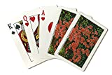 Premium quality poker size playing cards, printed right in America! 52 cards plus jokers included, with a tuck box for storage. Printed on heavy stock paper using a high-end digital printing press guarantees: color accuracy, durable imaging, ...