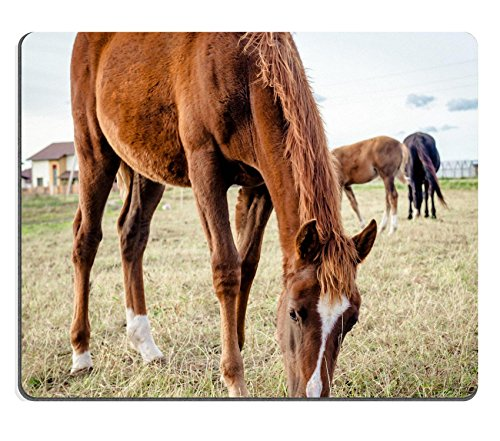 MSD Mousepad Image ID 23721939 Beautiful brown horse feeding outdoors