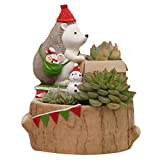 Sun Kea Succulent Vase Flower Pots Cute Animal Cartoon Home Decor Miniature Plant Pots, Open Presents