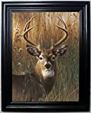 STAG 3D FRAMED Wall Art----Lenticular Technology Causes The Artwork To Have Depth and Move-HOLOGRAM Style Images-HOLOGRAPHIC Optical Illusions By THOSE FLIPPING PICTURES