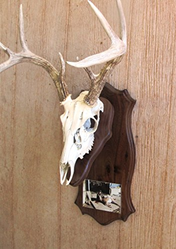 Top 9 best antler mount kit with picture