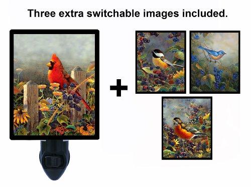 - Night Light w/Switchable Inserts - Sam Timm Bird Images