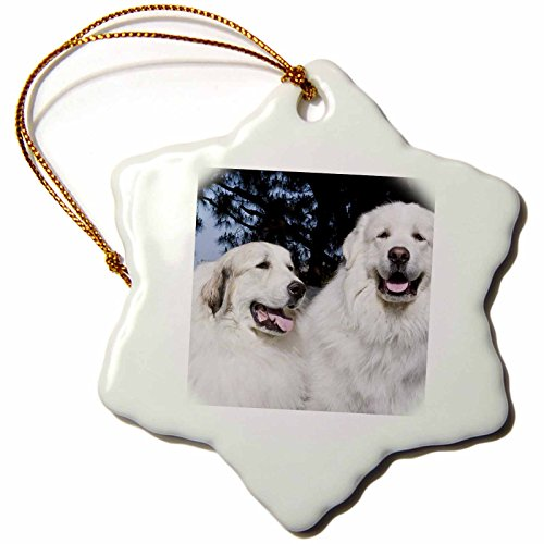 3dRose ORN_142944_1 Portrait of Two Great Pyrenees Dogs Us05 Zmu0274 Zandria Muench Beraldo Snowflake Ornament, Porcelain, ()