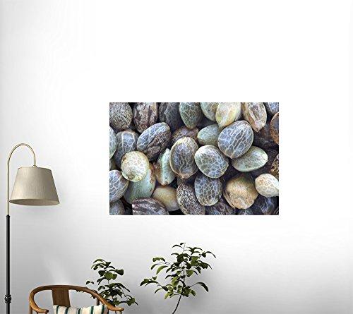 "Hemp Seeds - 24""W x 16""H - Peel and Stick Wall Decal by Wallmonkeys"