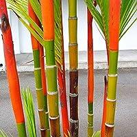 orange bamboo shoots