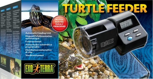 Turtle Feeder - 2