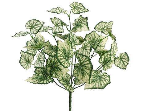 15-Begonia-Leaf-Bush-x7-Green-Cream-pack-of-12