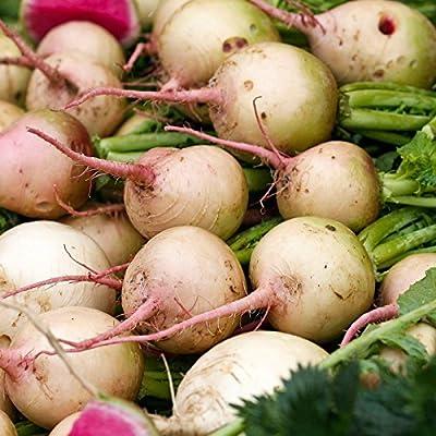 Watermelon Radish Seeds - Heirloom Garden Seeds, Non-GMO - Vegetable Gardening and Microgreens