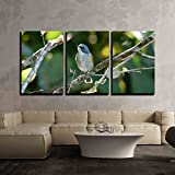 wall26 - 3 Piece Canvas Wall Art - beautiful male Red-flanked Bluetail Tarsiger cyanurus in Thai forest - Modern Home Decor Stretched and Framed Ready to Hang - 24''x36''x3 Panels