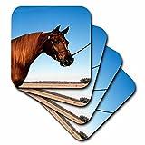 3dRose TDSwhite – Horse Equine Photos - Arabian Show Horse Pasture - set of 8 Coasters - Soft (cst_285453_2)