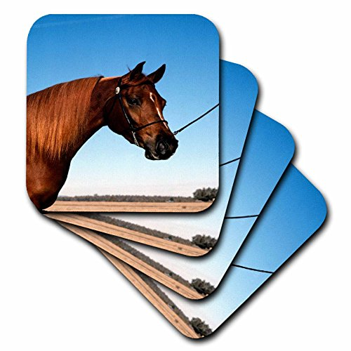3dRose TDSwhite – Horse Equine Photos - Arabian Show Horse Pasture - set of 8 Coasters - Soft (cst_285453_2) by 3dRose