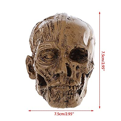 "OTGO Human Skull Resin Model Anatomical Medical Teaching Skeleton,2.95""x2.95"""