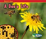 A Bee's Life, Nancy Dickmann, 1432941461