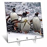 3dRose dc_10511_1 Desk Clock, Gentoo Penguin, 6 by 6-Inch