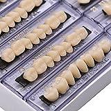 RZJZGZ 168 Pcs Dental Synthetic Resin Tooth Denture