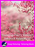 Stunning Cherry Blossom Sakura & Relax Music - Sleep Relaxing - Relaxing Music
