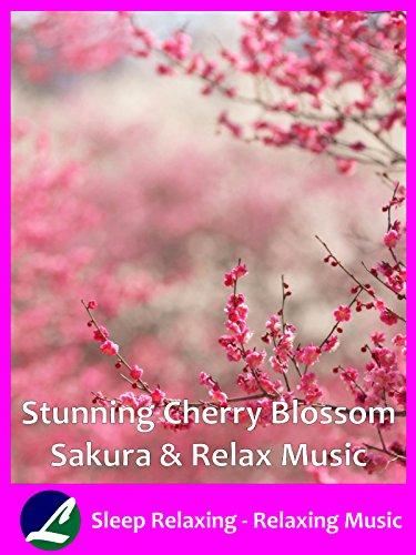Stunning Music - Stunning Cherry Blossom Sakura & Relax Music - Sleep Relaxing - Relaxing Music