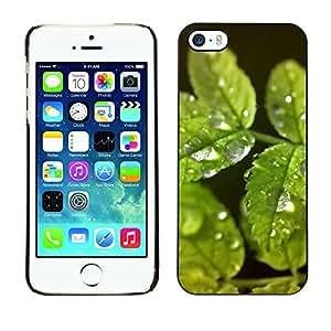Cubierta de la caja de protección la piel dura para el Apple iPhone 5 / 5S - Black & White Floral Rose Skull