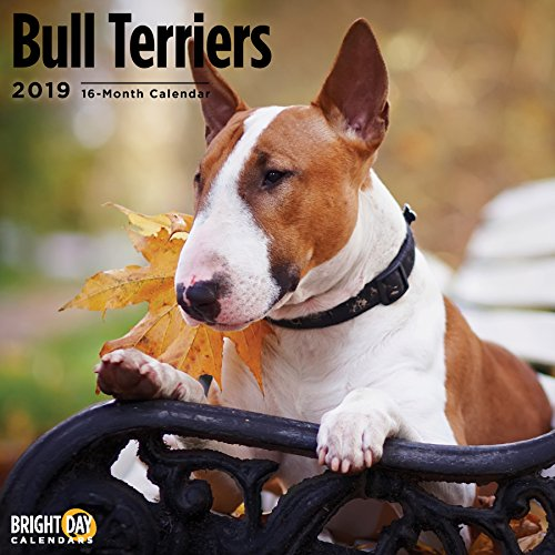Terriers Collection by Bright Day Calendars 16 Month Wall Calendar 12 x 12 Inches (Bull Terrier 2019) ()