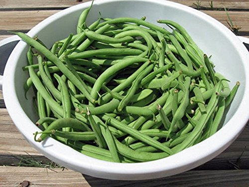 (COOL BEANS N SPROUTS -Kentucky Wonder Pole Beans 200 Seeds per pack , Organic , NON-GMO, COOL BEANS N SPROUTS)