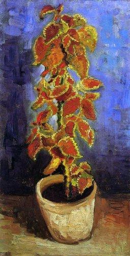 """Vincent Van Gogh Coleus Plant in a Flower Pot - 15"""" x 30"""" Premium Canvas Print"""