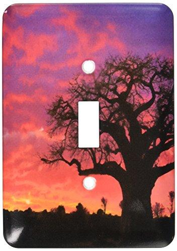 - 3dRose lsp_69975_1 African baobab tree, Tarangire National Park, Tanzania Single Toggle Switch