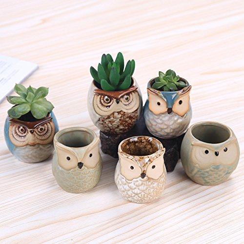 Asbana 6 PCS 2.5 Inches Mini Small Ceramic Owl Planters, Succulent Cactus Plant Flower Pot, Cute Owls Bonsai Pots Container Holder Gift with A Bottom Drainage Hole (Plants Not Included)