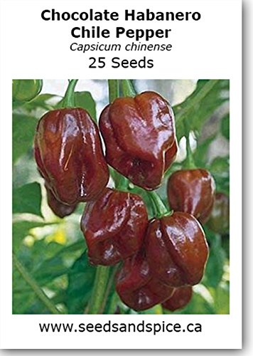 Chocolate Habanero Chile Pepper 25 Seeds Whish Seeds