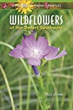 Search : Wildflowers of the Desert Southwest