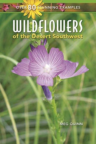 Wildflowers of the Desert - Desert Southwest The