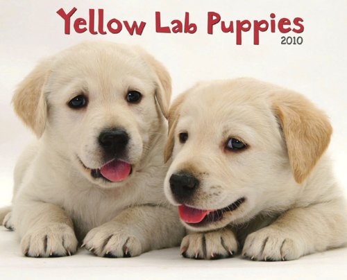- Yellow Lab Puppies 2010 Calendar