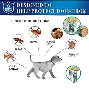 coleira-antipulgas-para-cachorros