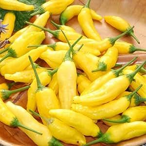 Plant World Seeds - Lemon Drop Seeds