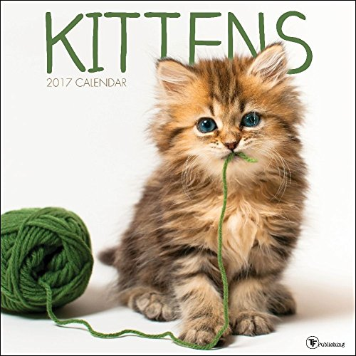 2017 Monthly Wall Calendar - Kittens