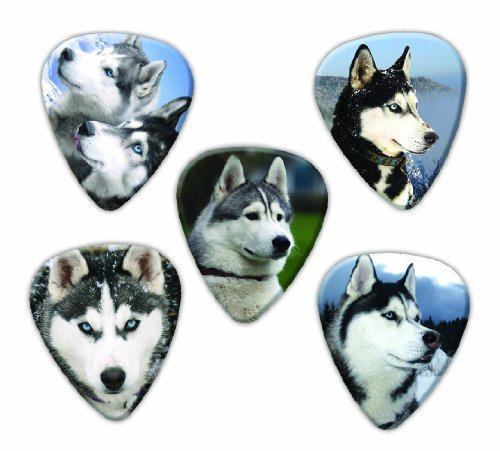 (Siberian Husky Dog 5 Loose Guitar Picks)