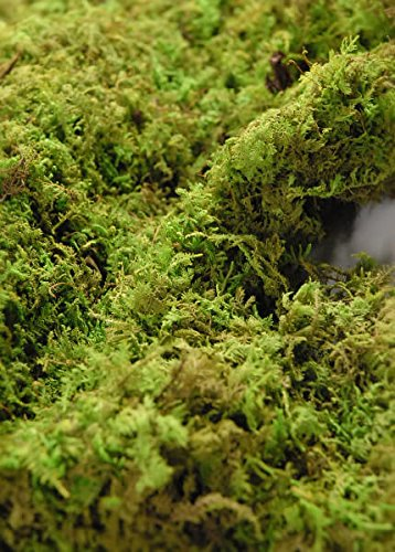 Preserved Moss Sheets 4 lb 1'' Thick - Excellent Home Decor - Outdoor Indoor