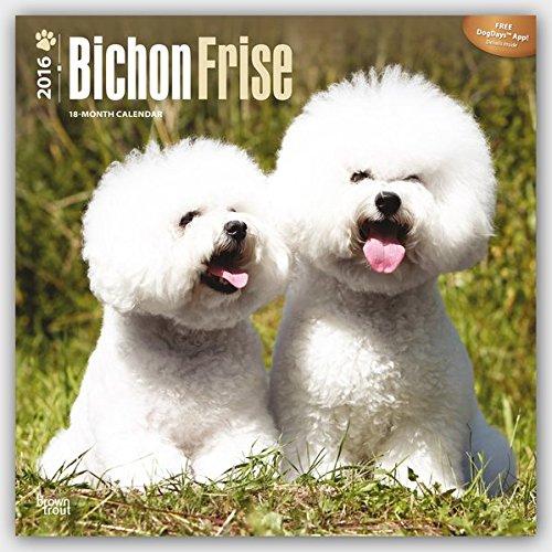 Bichon Frisé 2016 - Gelockter Bichon - 18-Monatskalender mit freier DogDays-App: Original BrownTrout-Kalender [Mehrsprachig] [Kalender] (Wall-Kalender)