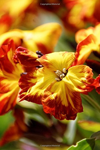 Red and Yellow Pansy Flower Blooms Journal: Take Notes, Write Down Memories in this 150 Page Lined Journal pdf