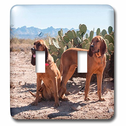 3dRose Danita Delimont - Dogs - Bloodhounds in the Sonoran Desert, MR - Light Switch Covers - double toggle switch (lsp_258191_2)